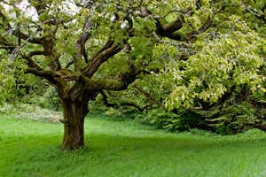 Belleek-Castle-tree