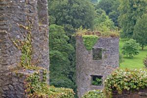 Blarney-Castle-ivy