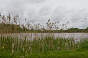 Dromoland Castle Lake